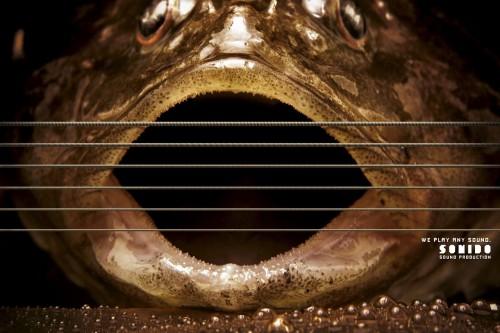 Sonido Produtora de Som: Instruments