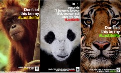 WWF: The Last Selfie SnapChat Campaign