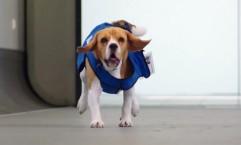 KLM: Social Dog