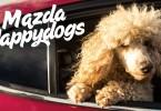 Mazda / The Danish Animal Welfare Society: Happy dogs
