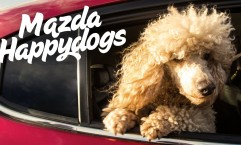 Mazda / The Danish Animal Welfare Society: Happy dogs