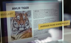 WWF: The Tiger Running Challenge