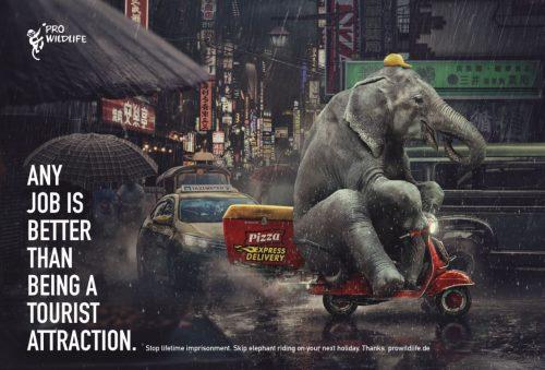 Pro Wildlife: Elephant, Tiger